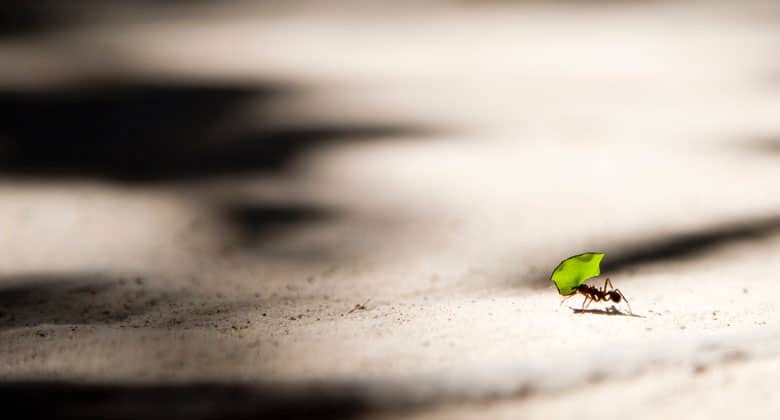 Aesthetic Blasphemy | Little ant carring a green leaf